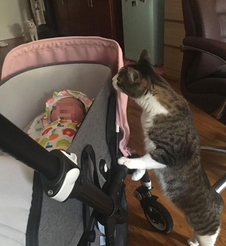 clio make up gatto oscar malato